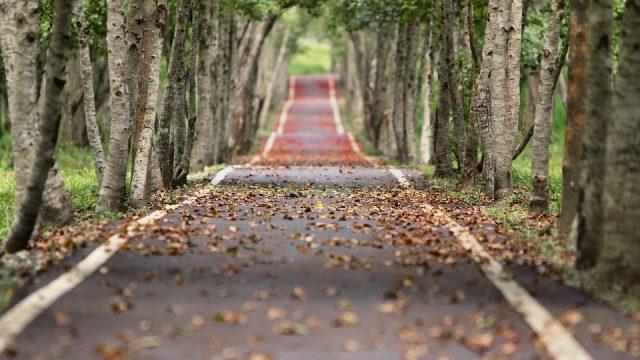 route entourrée d'arbres